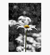 Sunny Disposition Despite Showers Photographic Print
