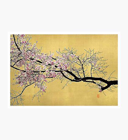 Sakura on Gold Photographic Print