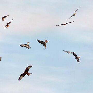 Avian aerobatics by missmoneypenny