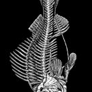 Fish Skeleton  by eugeniahauss
