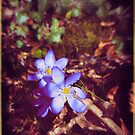The hidden Spring by Silvia Ganora