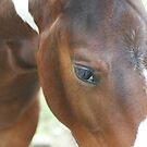 Washington Horses by pallyduck