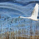 White Swan over Hogganfield Loch by simpsonvisuals