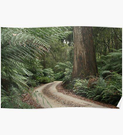Spoin Kop road, far nor west Tasmania , Australia Poster