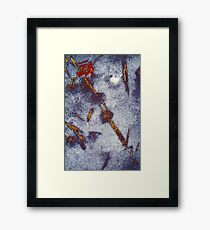 Ice Crystals on the Sidewalk IV Framed Print
