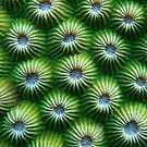 Green Honeycomb by Reef Ecoimages