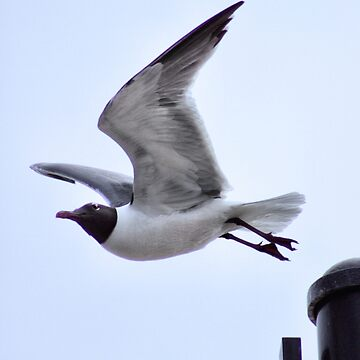 Seagull in Flight by amandavontobel