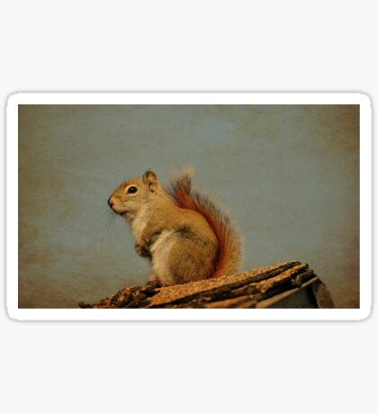 American red squirrel Sticker