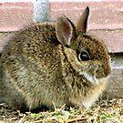 Florida Yard Bunny ~ a Wild Rabbit by SummerJade