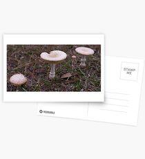 Dusky Mushroom Trio Postcards