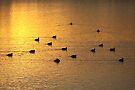 On Golden Pond by Jo Nijenhuis