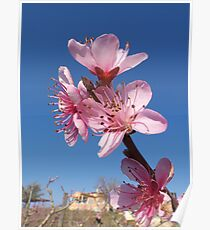 Peach flowers Poster