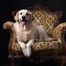 Royal Golden by Karen Havenaar