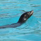 seal as cute as can be by carol oakes