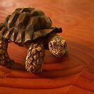 Turtle Tyme by DottieDees