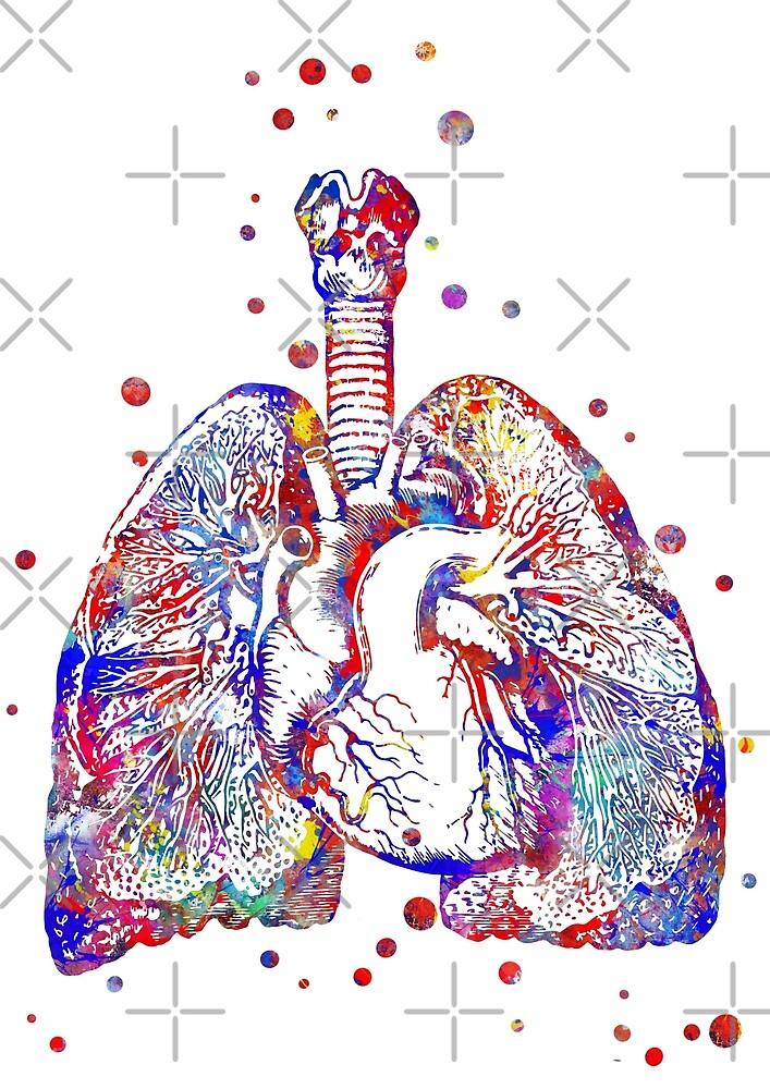 Heart And Lungs Heart Art Anatomy Art Lungs Art By Rosaliartbook