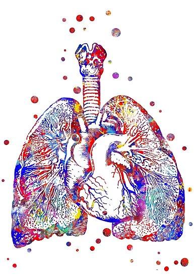 Pósters «Corazón y pulmones, arte del corazón, arte de la anatomía ...