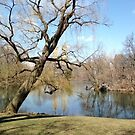 Central Park Der See von MissCellaneous