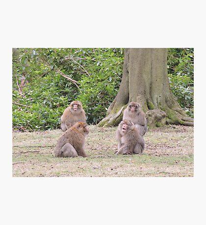 Monkey Meeting Photographic Print
