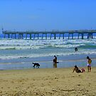 Doggy Beach by Auntymazza