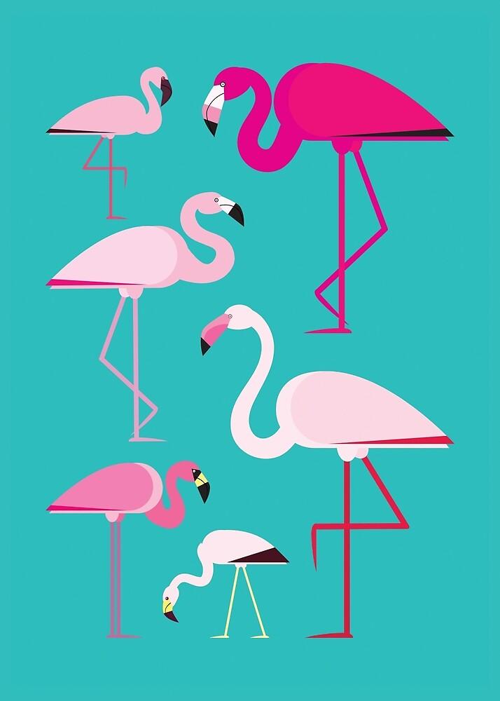 Flamingos by Fabio Rex