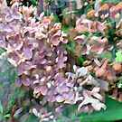 Lilac In The Wind   by Susan  Detroy