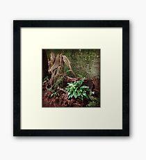 Woodland Fern Framed Print