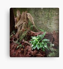 Woodland Fern Metal Print
