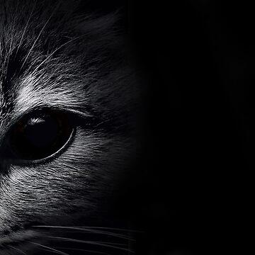 Eye Spy Cat by ssduckman
