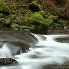 Sweet Creek 6 by CarrieAnn