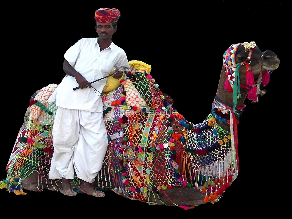 Camel transport, Jodhpur, Rajasthan, India by Bev Pascoe