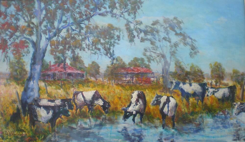 Cows at the waterhole by David Hinchliffe
