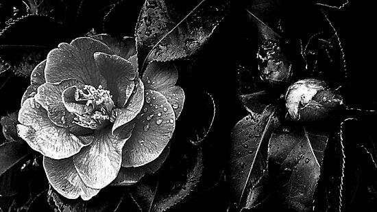 The darkness within by Josie Jackson