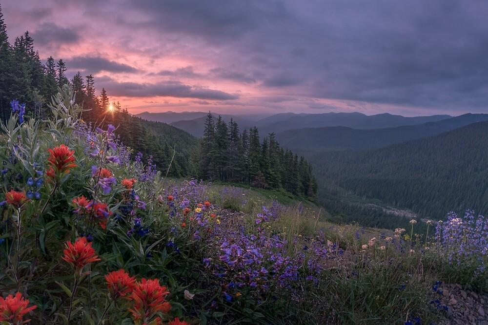 Wildflowers on Bald Mountain, Oregon by mattmacpherson