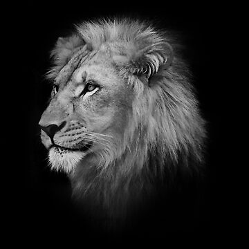 Lion Head by SeeThinkCreate