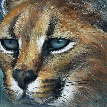 Caracal by Lefrog