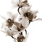 Sepia Orchid by swight