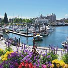 Beautiful Victoria Harbor by Lucinda Walter