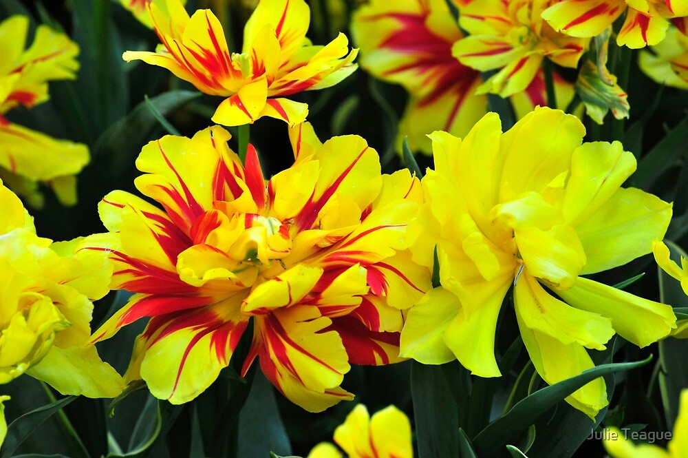Bright Tulips by jooles1707