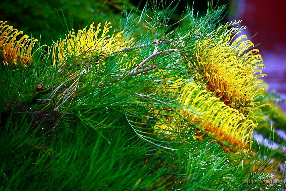 Yellow Grevilleas by jooles1707