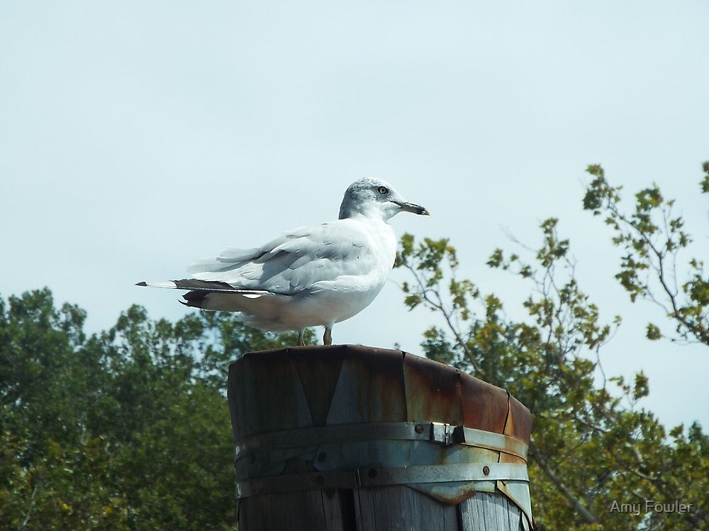 Seagull by Amy Fowler