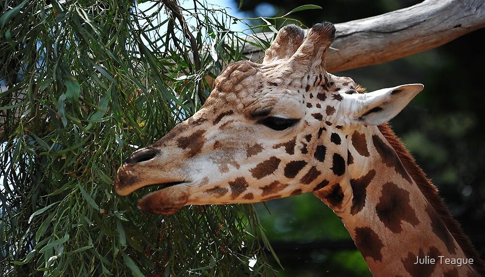 Giraffe lunch by jooles1707
