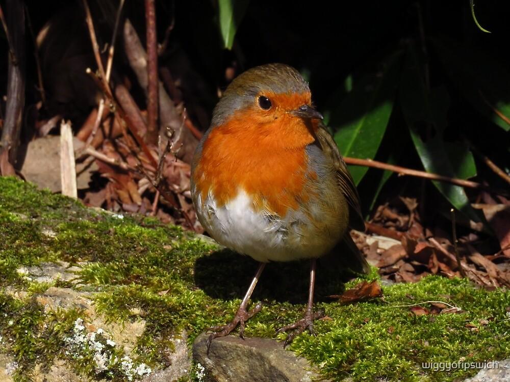 Robin Redbreast by wiggyofipswich