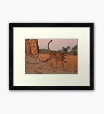 Feline beauty Framed Print