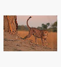 Feline beauty Photographic Print