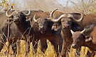 Pausing to ponder by Explorations Africa Dan MacKenzie