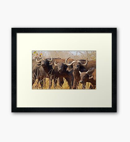 Pausing to ponder Framed Print
