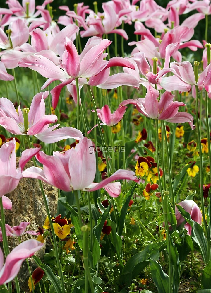 flower garden close up spring season by goceris