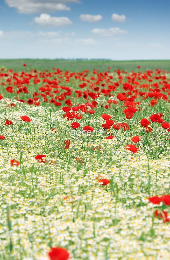 chamomile and poppy wild flower meadow by goceris