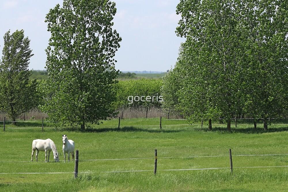 Lipizzaner horses on pasture landscape by goceris